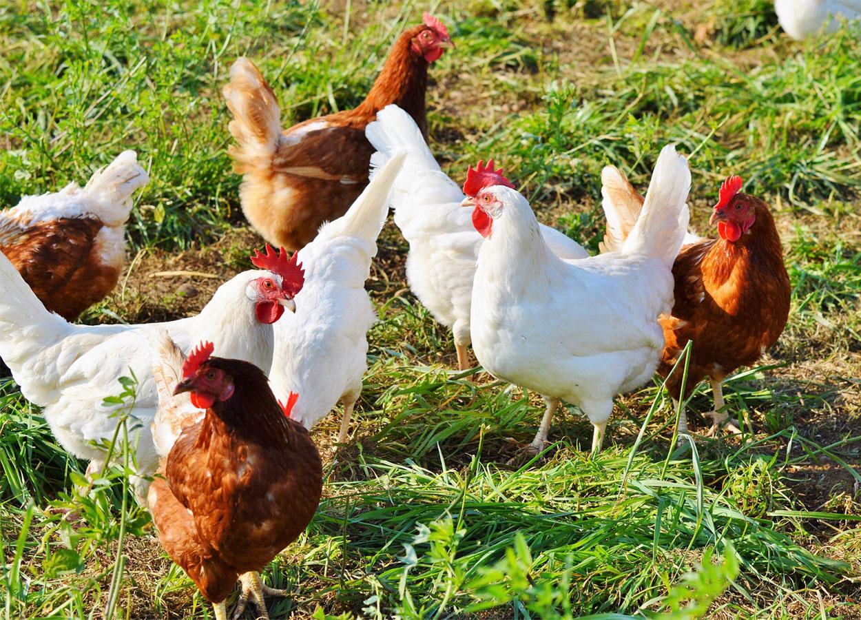 Ok del Senato a ddl produzioni agroalimentari locali, il testo va alla Camera